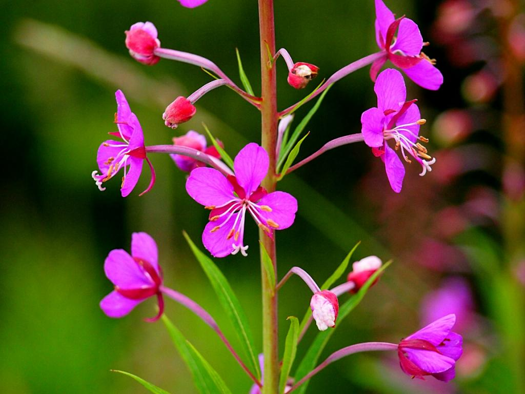 Click image for larger version  Name:AK_Flower.jpg Views:99 Size:84.0 KB ID:40776