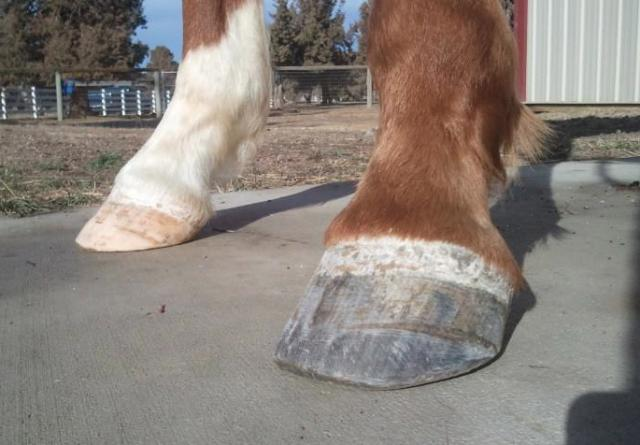 Click image for larger version  Name:big toe.jpg Views:76 Size:39.5 KB ID:50753