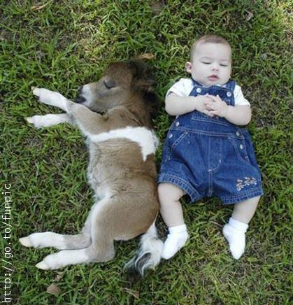 Click image for larger version  Name:donkey_and_baby.jpg Views:70 Size:49.7 KB ID:25669