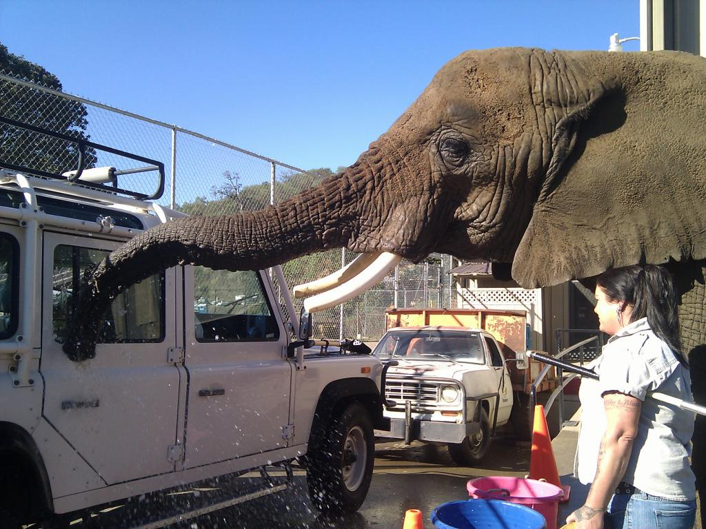 Click image for larger version  Name:elephant110.jpg Views:315 Size:150.7 KB ID:33746