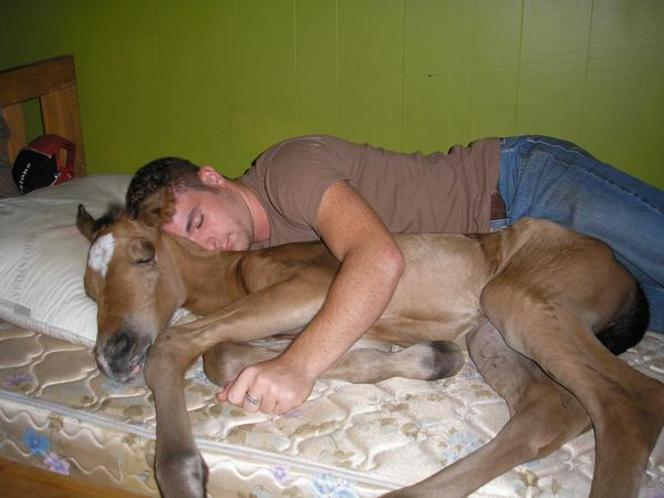 Click image for larger version  Name:horseyhorsey.jpg Views:101 Size:33.2 KB ID:25667