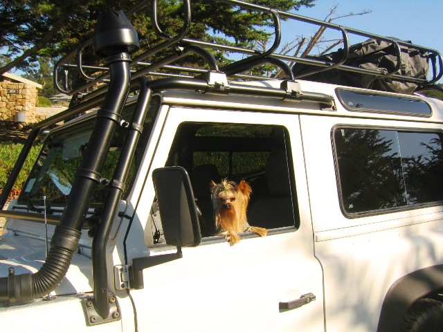 Click image for larger version  Name:Kody at the Helm.JPG Views:71 Size:122.6 KB ID:16577