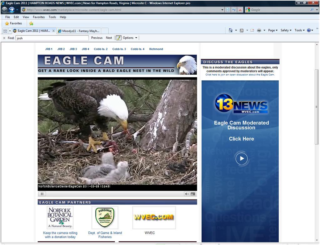 Click image for larger version  Name:Live Eagle Cam.jpg Views:141 Size:125.9 KB ID:37294
