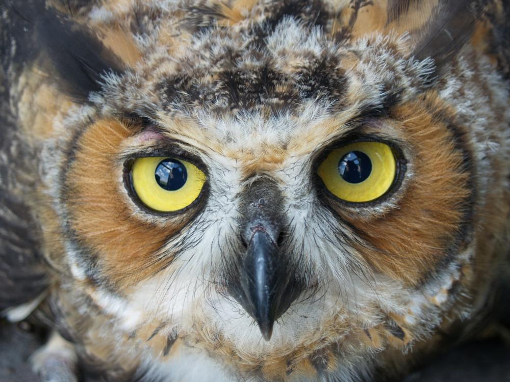 Click image for larger version  Name:OWL2.jpg Views:24 Size:118.0 KB ID:124940