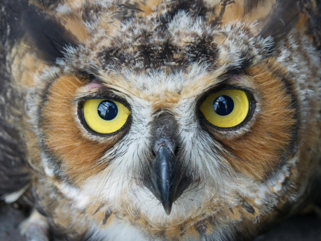 Click image for larger version  Name:OWL2.jpg Views:29 Size:122.5 KB ID:135565