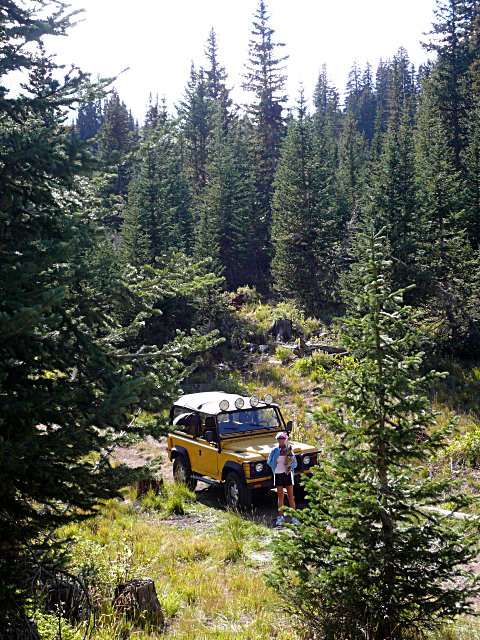 Click image for larger version  Name:Rover-Holly-Forest.JPG Views:285 Size:159.1 KB ID:10323