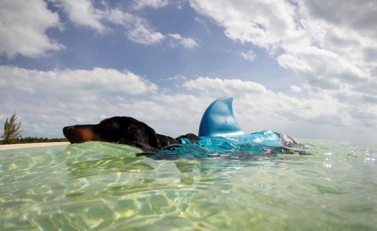 Click image for larger version  Name:shark-fin-dog-life-jacket-3810-1.jpg Views:53 Size:45.8 KB ID:107180
