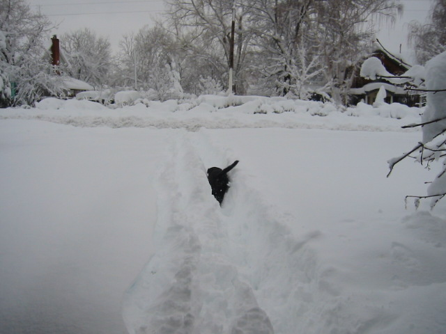 Click image for larger version  Name:snow 004.jpg Views:162 Size:76.1 KB ID:110