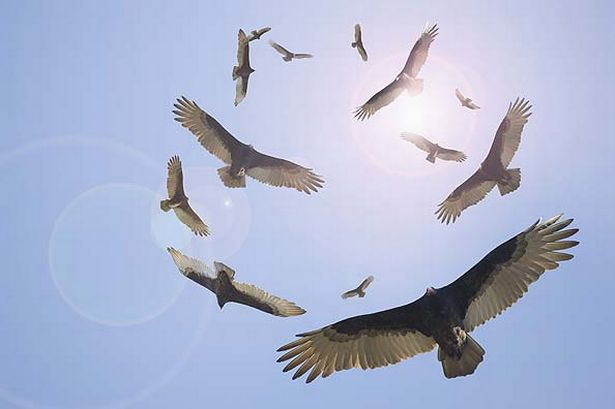 Click image for larger version  Name:vultures circling.jpg Views:74 Size:25.4 KB ID:65818