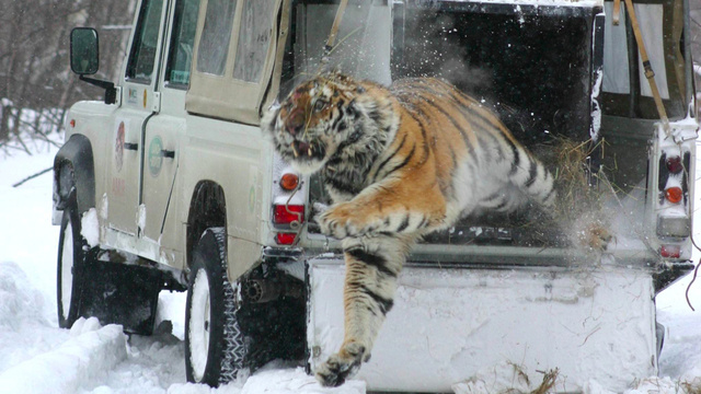 Click image for larger version  Name:xlarge_land_rover_tiger.jpg Views:244 Size:127.2 KB ID:38055